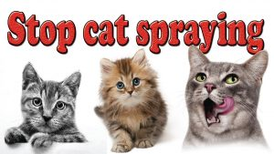 Stop Cat Spraying